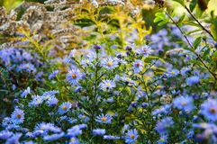Flores do prado no sol foto de stock