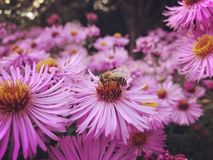 Flores do prado do outono foto de stock