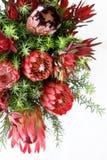 Flores do Protea Fotografia de Stock