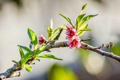 Flores do quintal Fotografia de Stock Royalty Free