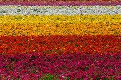 Campo das flores Foto de Stock Royalty Free
