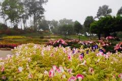 Flores do rosa e as brancas com uma gota da ?gua em um jardim, em um fundo colorido do jardim imagens de stock