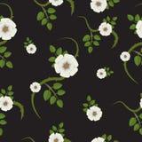 Flores do Rosehip Flores brancas e folhas do verde Planta espinhosa Rose Flower Imagem de Stock Royalty Free
