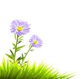 Flores do roxo do vetor Imagem de Stock