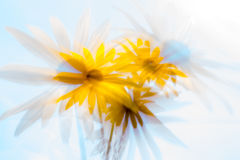 Flores do Rudbeckia em um vaso imagens de stock royalty free