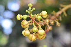 Flores do Sal Imagem de Stock Royalty Free