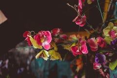 Flores do sibilo nas paredes da casa foto de stock royalty free