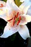 Flores do tempo de mola Foto de Stock