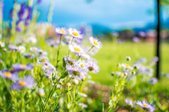 Flores do tempo de mola em um jardim Fotos de Stock Royalty Free