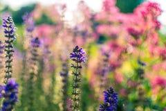 Flores do tempo de mola em um jardim Fotografia de Stock Royalty Free