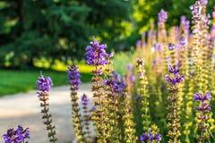 Flores do tempo de mola em um jardim Foto de Stock