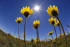 Flores do tempo de verão Imagens de Stock Royalty Free