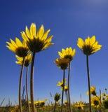 Flores do tempo de verão Fotos de Stock