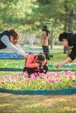Flores do tiro imagens de stock