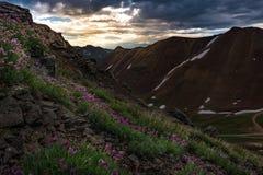Flores do trevo roxo - passagem de Poughkeepsie, San Juan Mountains de fotos de stock royalty free