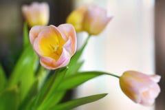 Flores do Tulip imagens de stock royalty free