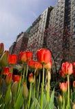 Flores do Tulip no parque de New York City imagens de stock royalty free