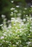Flores do verão fotos de stock royalty free