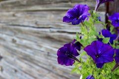 Flores do verão Fotografia de Stock