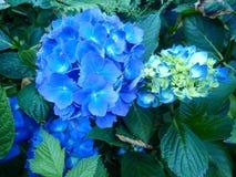 Flores do verão Fotografia de Stock Royalty Free