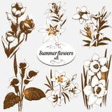 Flores do verão ajustadas Imagens de Stock