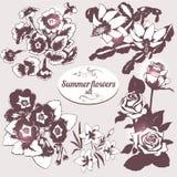 Flores do verão ajustadas ilustração stock