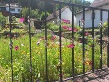 Flores do verão atrás de uma cerca Fotos de Stock Royalty Free