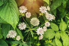 Flores do verão da mola Imagens de Stock