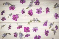 Flores do verão e madeira branca Imagem de Stock