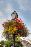 Flores do verão em uma cesta de suspensão Fotografia de Stock