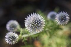 Flores do verão na floresta Fotografia de Stock