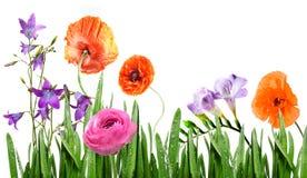 Flores do verão na grama Foto de Stock