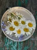 Flores do verão na placa pequena da porcelana imagem de stock