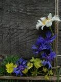Flores do verão no fundo de madeira foto de stock royalty free