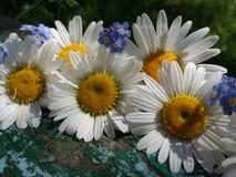 Flores do verão no fundo de madeira velho imagens de stock