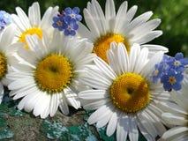 Flores do verão no fundo de madeira velho fotos de stock