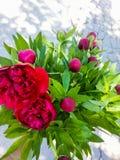 Flores do vermelho do grupo fotos de stock royalty free