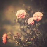 Flores do vintage Imagem de Stock Royalty Free