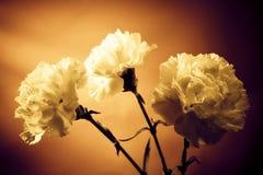 Flores do vintage Foto de Stock Royalty Free