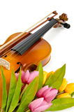Flores do violino e do tulip Imagem de Stock Royalty Free