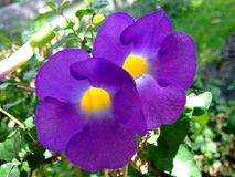 Flores do Wayside Imagem de Stock Royalty Free