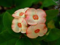 Flores do Wayside imagem de stock