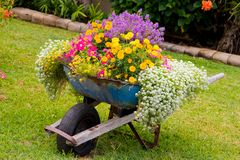 Flores do Wheelbarrow Fotos de Stock