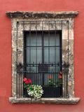 Flores do whit da janela Imagens de Stock