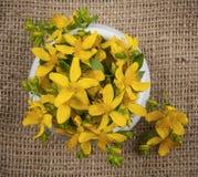 Flores do wort de St John Imagens de Stock Royalty Free