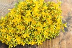 Flores do Wort do ` s de St John Fotografia de Stock Royalty Free