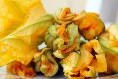 Flores do Zucchini fotografia de stock royalty free