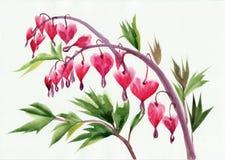 Flores dos corações de sangramento ilustração stock