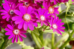 Flores dos floristas Foto de Stock Royalty Free