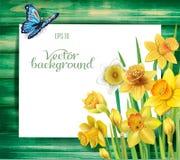 Flores dos narcisos amarelos no fundo de madeira ilustração royalty free